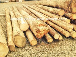 This are the raw materials used for the production of Virgin Wood Pellets Silver Fir. After the delivery from the mountains, the quality manager decides if the quality of timber satisfies the internal standards for the production of pellet.